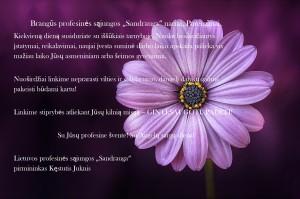 nature-purple-petals-36753